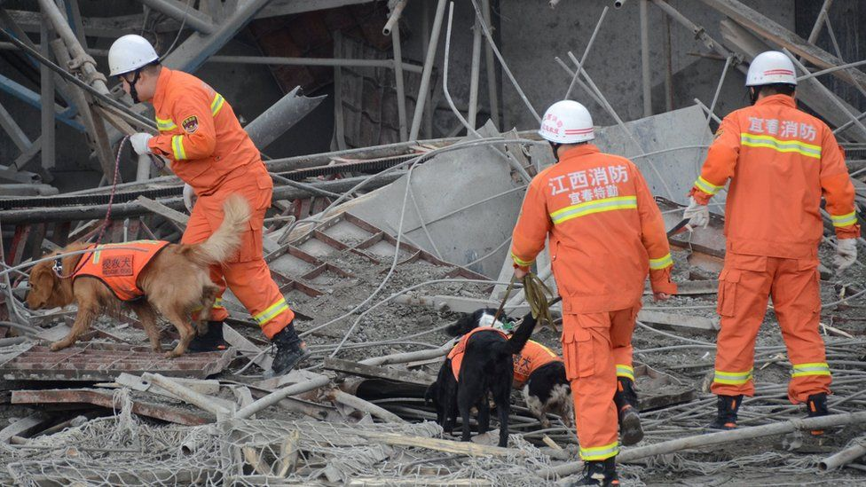Rescue workers use dogs in their search at the site where a power plant's cooling tower under construction collapsed in Fengcheng