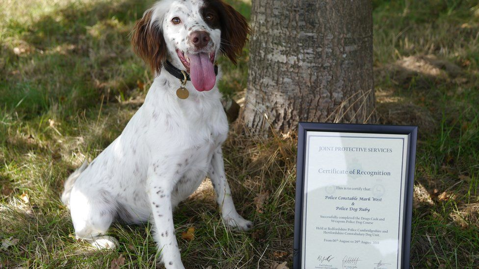 Ruby and her certificate