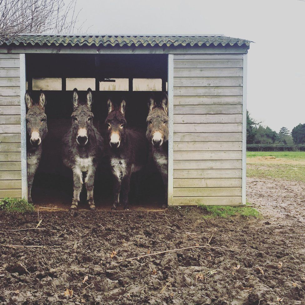Donkey's in a shed