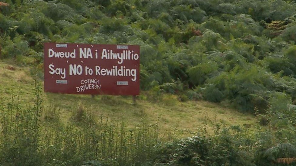 In the Cambrian Mountains there's strong local opposition to rewilding