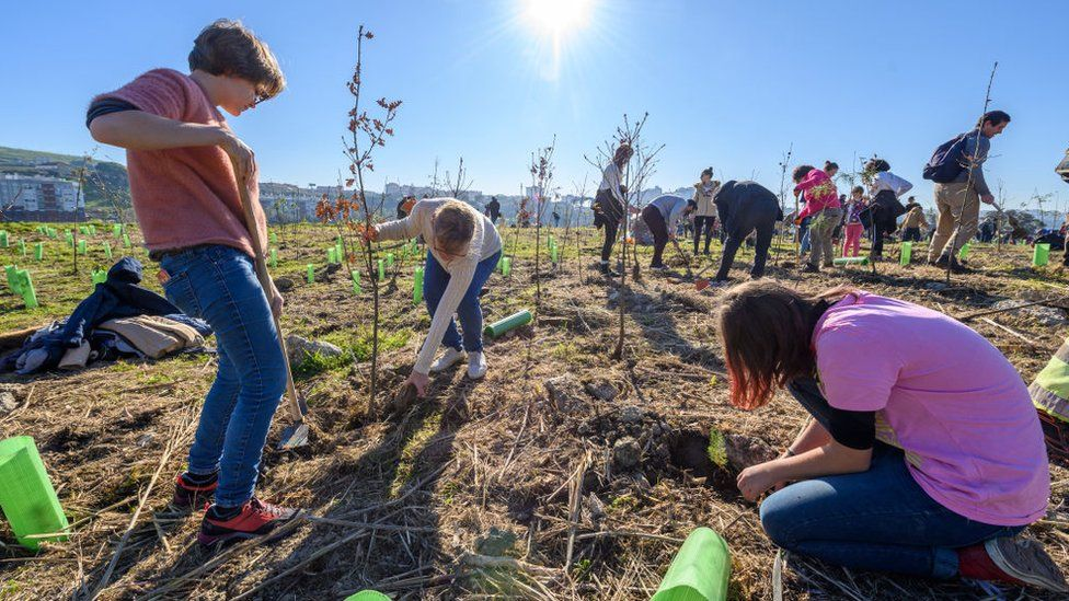 Planting More Trees Would Increase Rainfall In Europe Which Can Help Combat Climate Change, Study Says