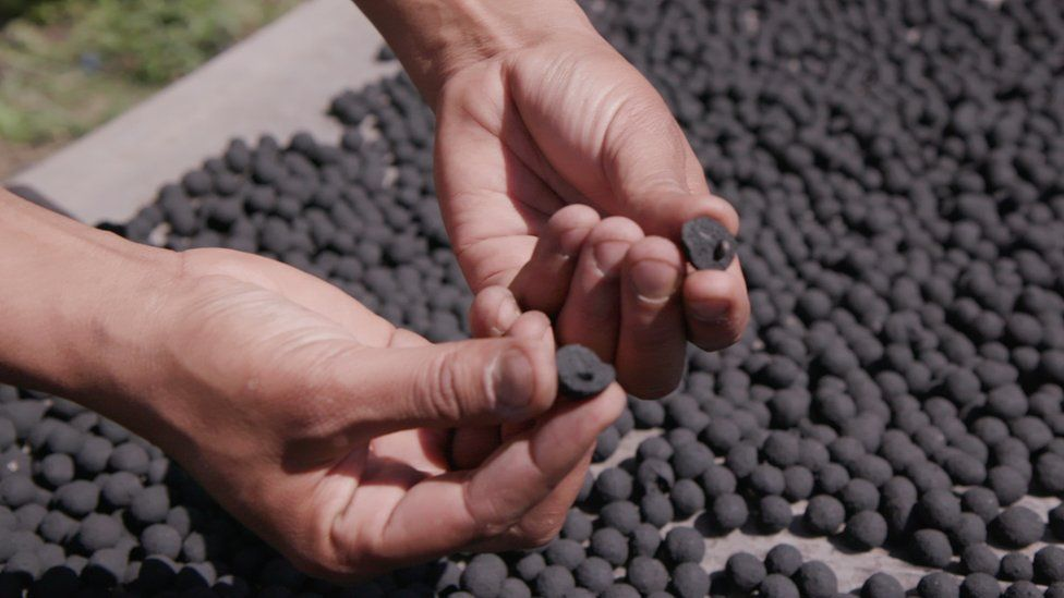 Man's hands holding half of a charcoal seedball in each hand to reveal the tree seed inside