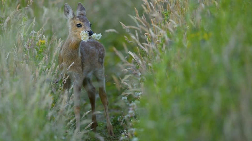 Phil Johnston's winning image of a young roe deer