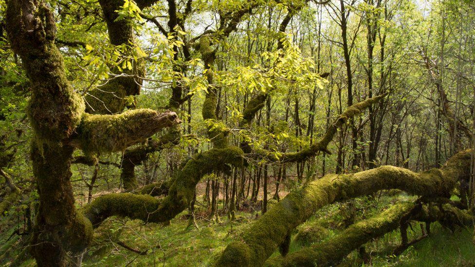 Scotland's rainforest