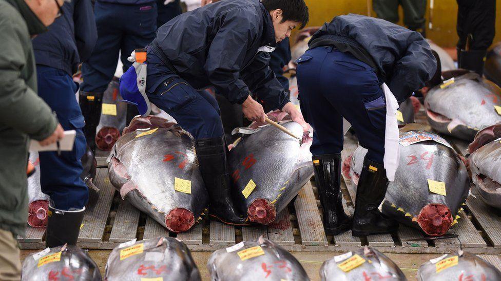 Tuna at a Tokyo market