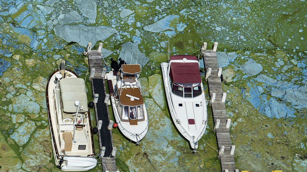 Boats docked at Central Marine in Florida are surrounded by blue green algae.