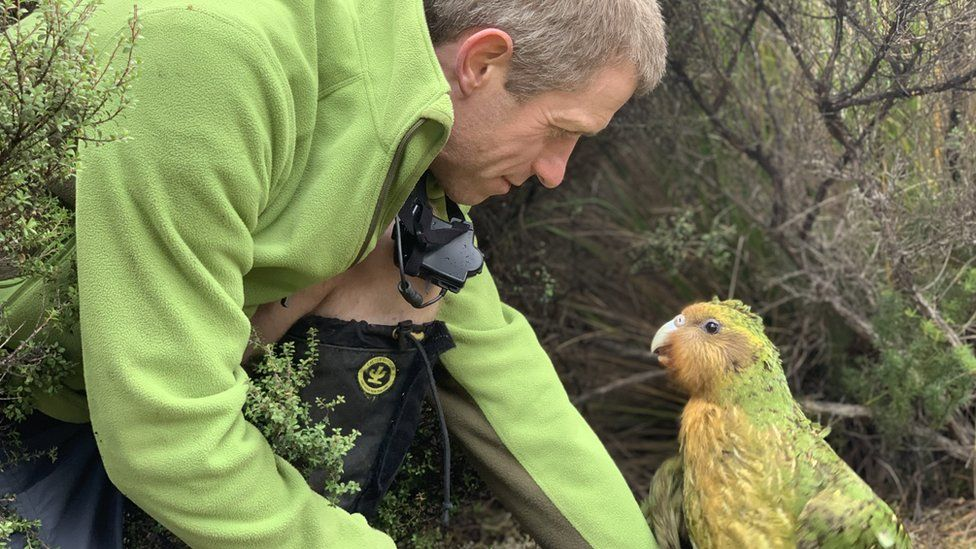 A kakapo parrot with a scientist from the New Zealand DOC