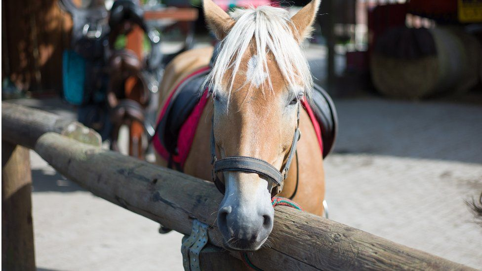 Horse, Norway
