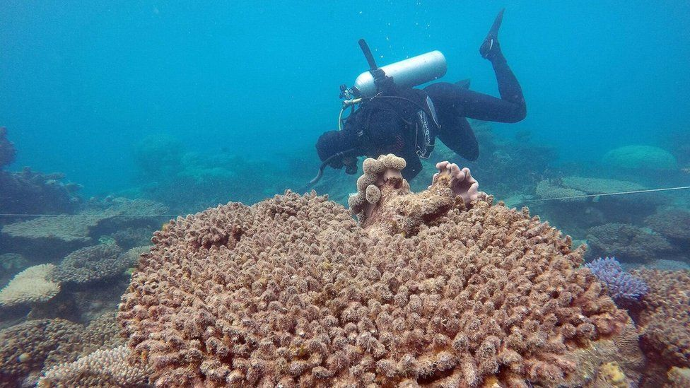 Scientists assess coral mortality on Zenith Reef following the bleaching event, Northern Great Barrier Reef, November 2016