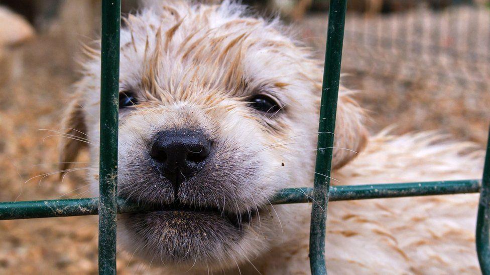 Puppy biting cage wire