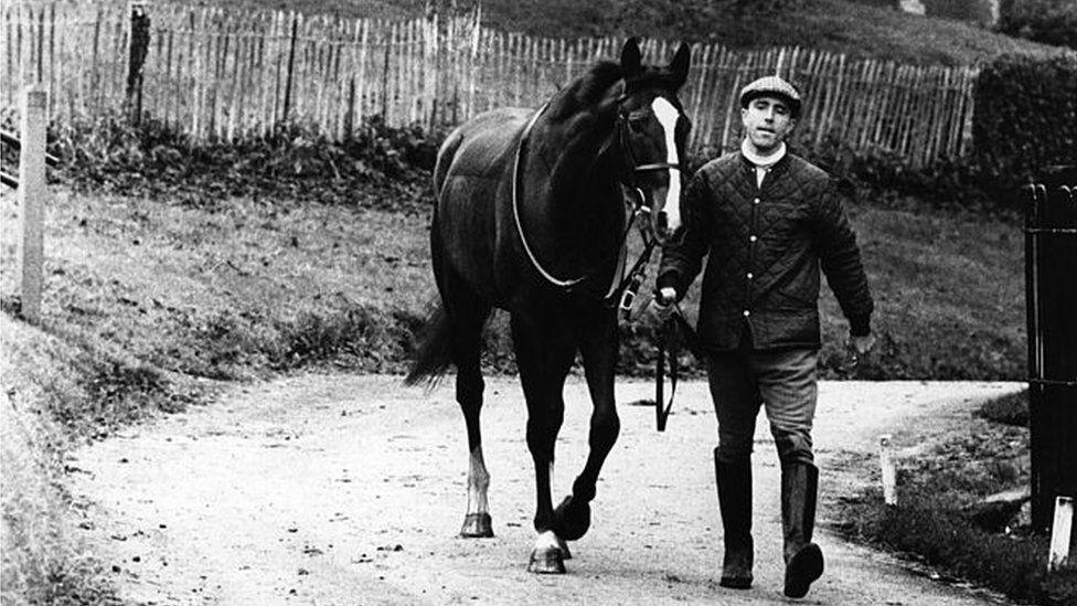 Ben Nevis the horse