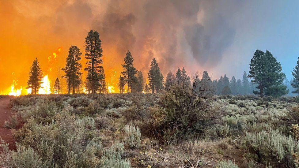 Oregon Bootleg Fire: Evacuations as largest US fire burns 300,000 acres thumbnail