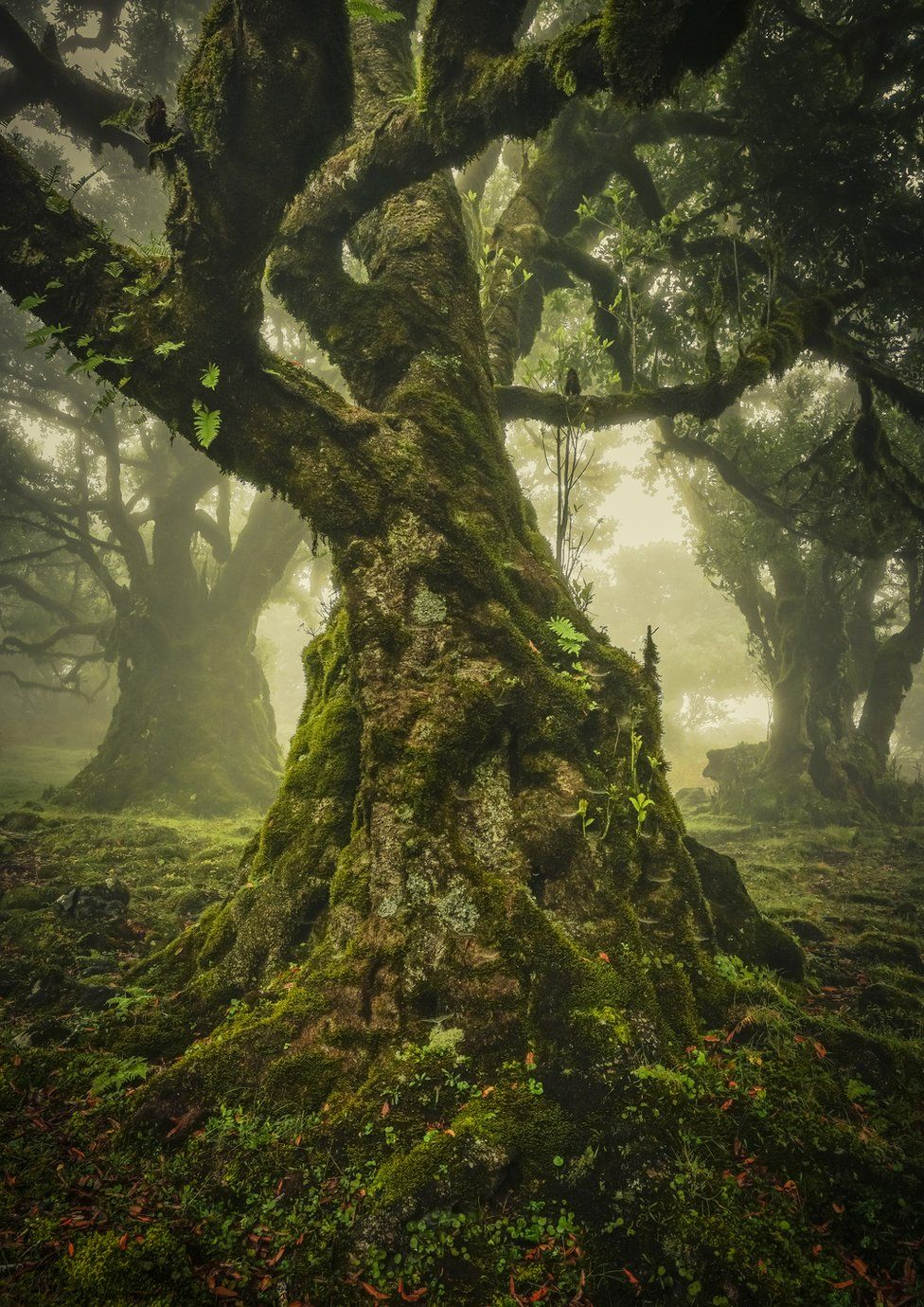 A photo of an old tree in a green forest