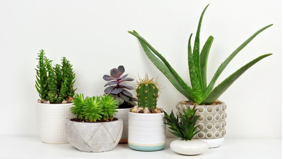 Potted house plants