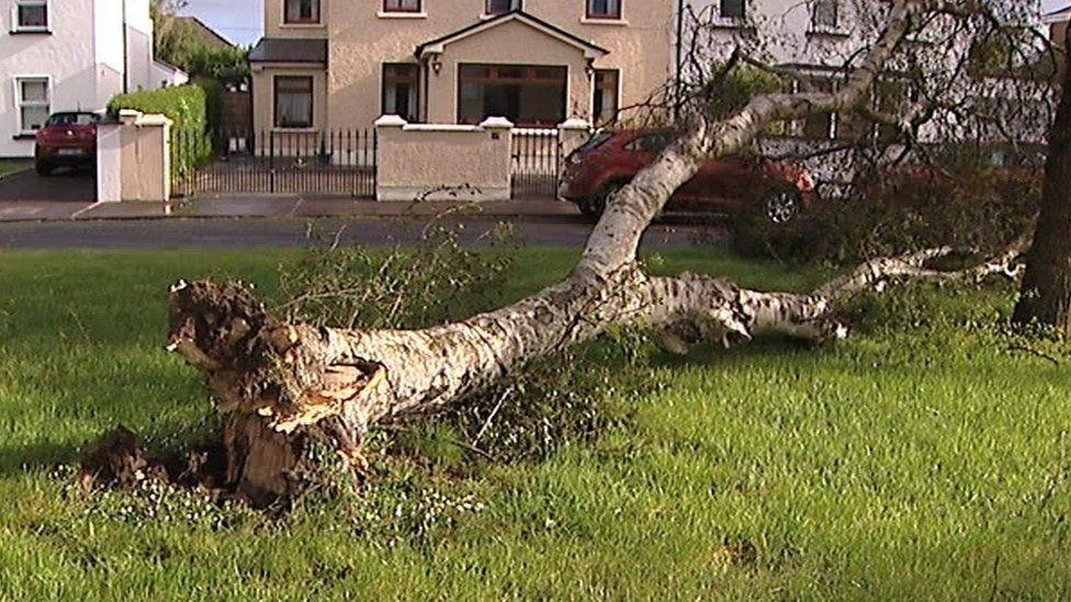 Tree damaged in Republic of Ireland