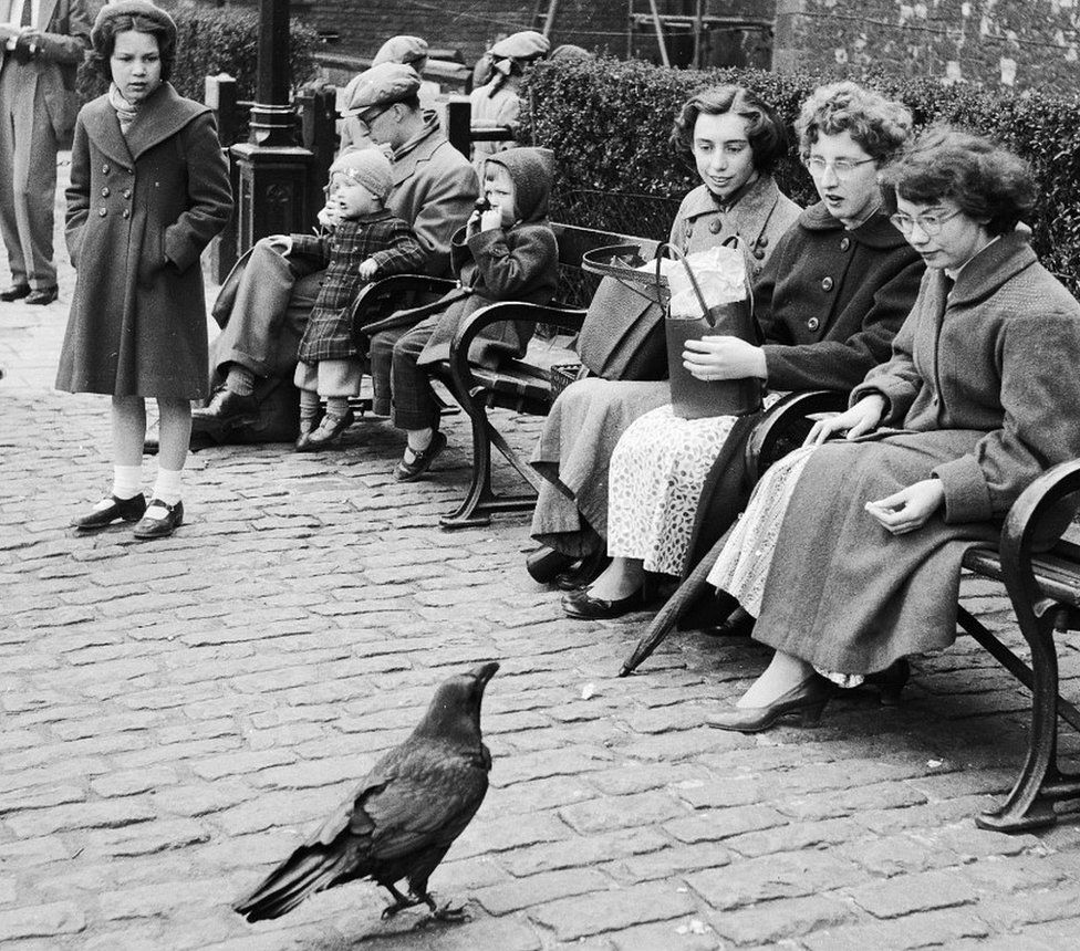 Raven in 1956