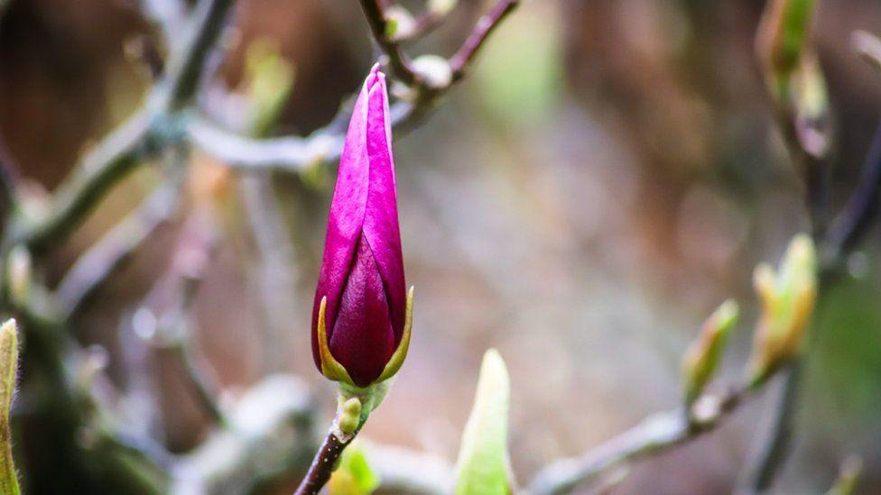 A flower snapped in Abingdon