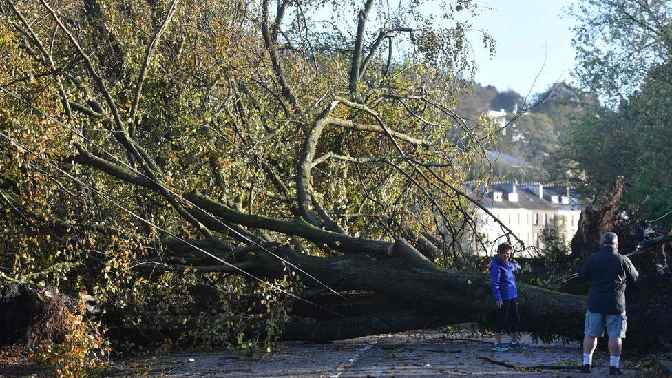 Residents look at fallen trees in Cork