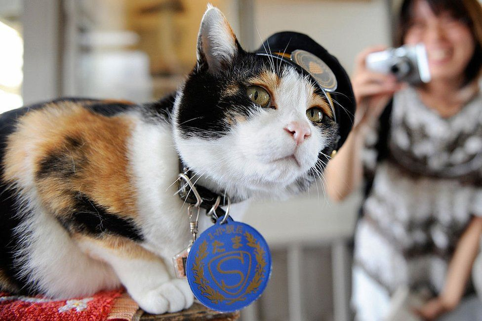 A woman tries to take a photo of 'Tama', a nine-year-old female tortoiseshell cat wearing a formal stationmaster's cap of the Wakayama Electric Railway, as the feline sits on a ticket gate at Kishi station on the Kishigawa line in the city of Kinokawa, in Wakayama prefecture on 22 May 2008.