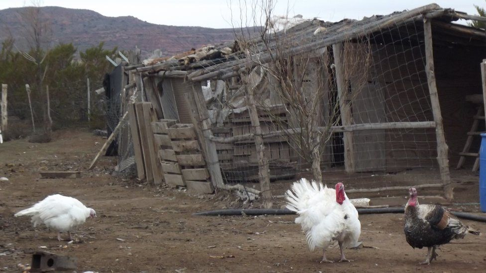 Chickens and turkeys at the farm owned by Albino Campo's son