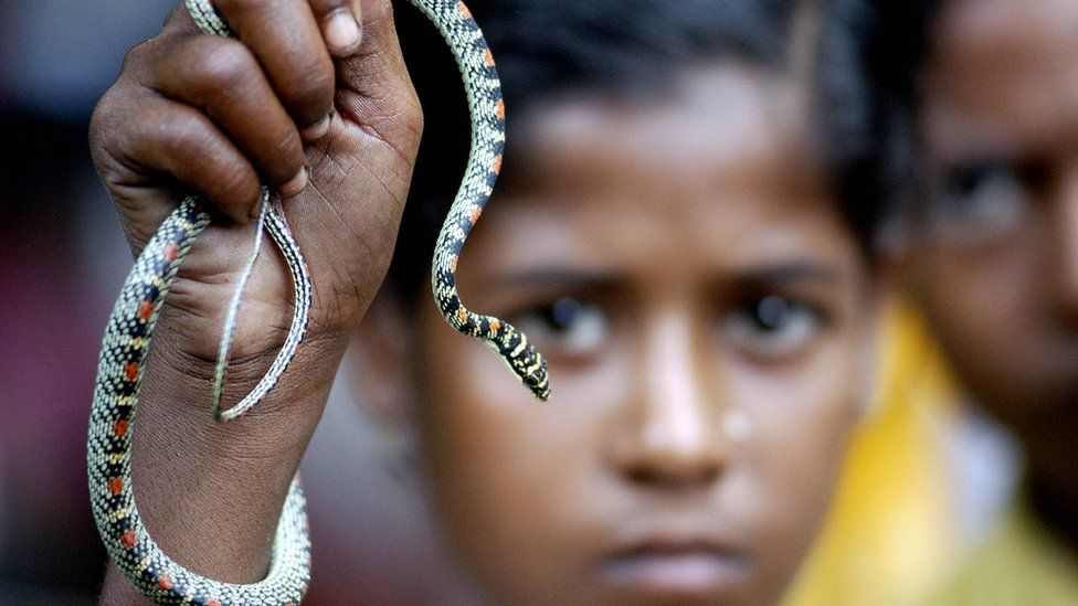 A child snake charmer in India