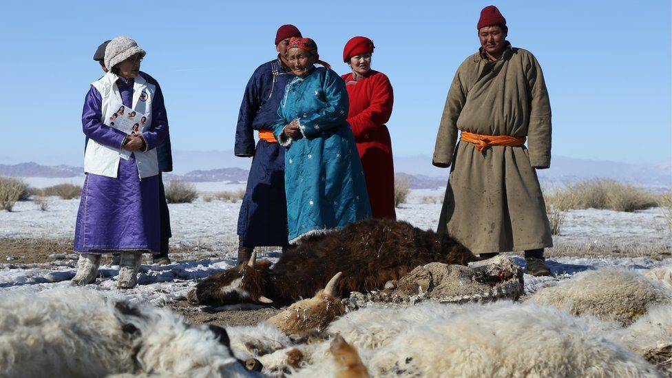 People from herder community standing next to Red Cross staff and animal corpses