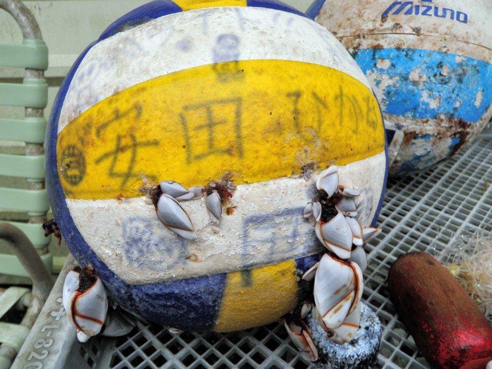 tsunami debris - basketball covered in barnacles