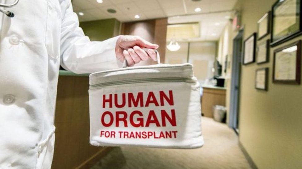 rhoi organau