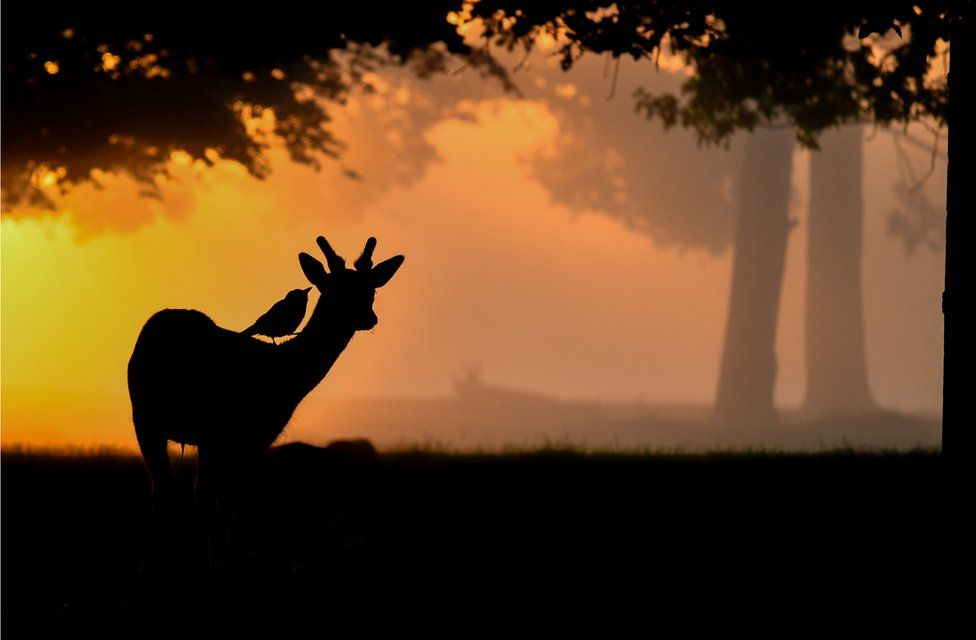A silhouette of a deer with a bird on its back