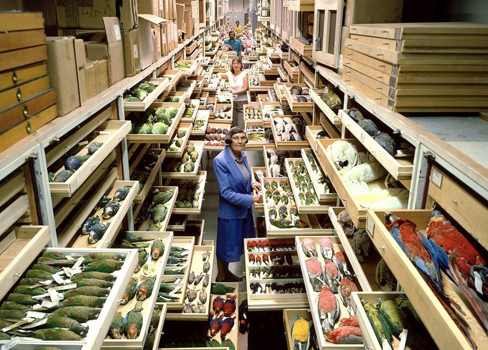Bird specimen collection at the Smithsonian Museum of Natural History