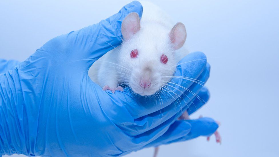 A mouse being held in a gloved hand