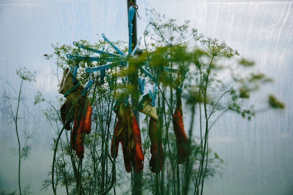 Gloves dangle from a clothes line, surrounded by green plants