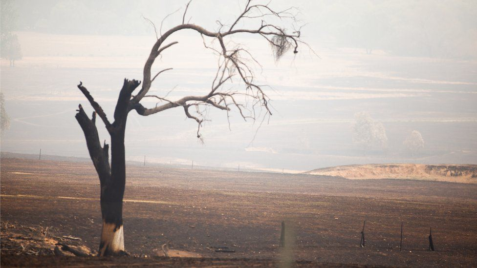 A scorched tree stands on its own in farmland burnt by fires