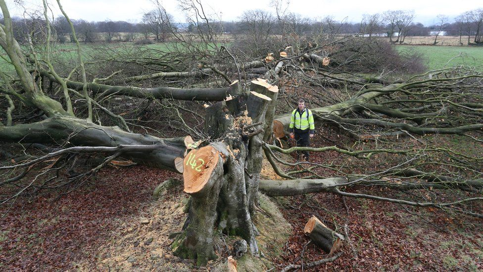 The felled trees on land in Manmoel
