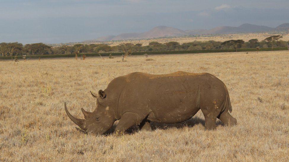 Rhino (c) Patrick Bigger