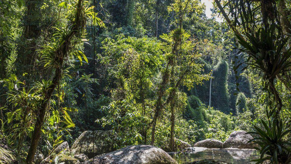'Animais carbonizados e silêncio no lugar do verde e som de pássaros': biólogo descreve cenário apocalíptico após queimadas