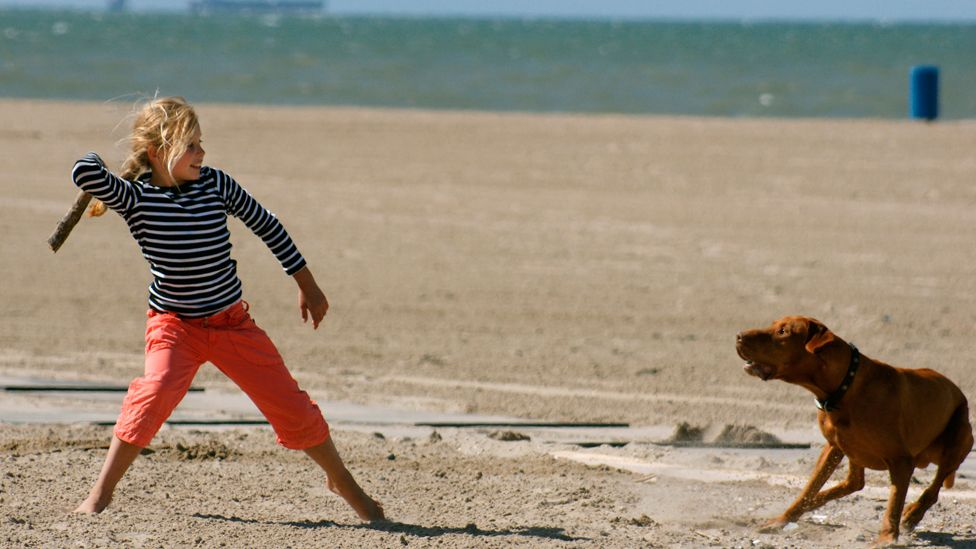 Girl throws stick to dog on beach