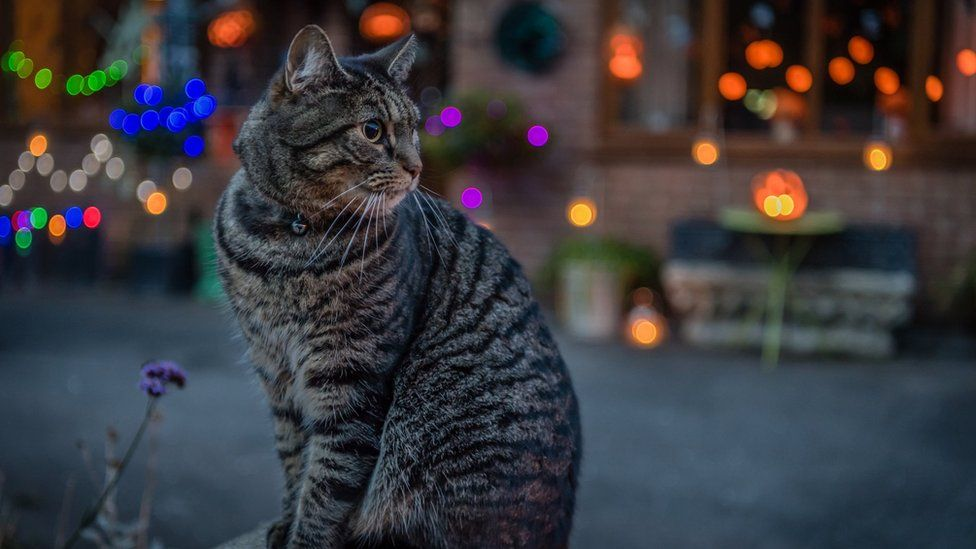 This cat is ready for Halloween at Farmoor