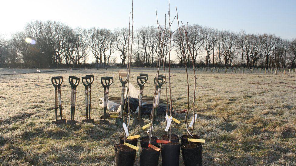 Tree planting kit (Image: City of Trees)