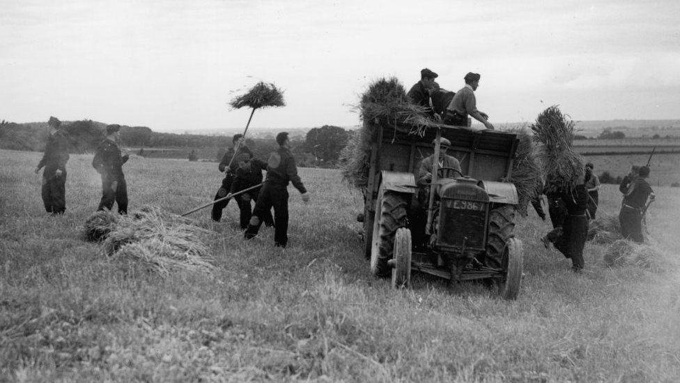 POWs work at a farm