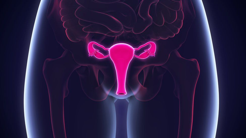 The ovaries in a woman's body