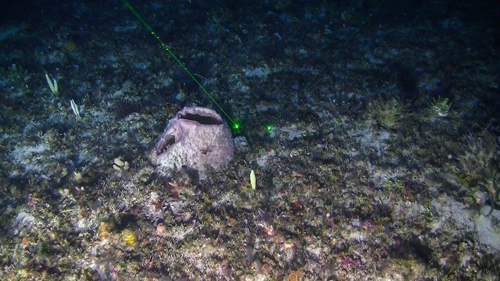 Image shows coral reef discovered in the Amazon