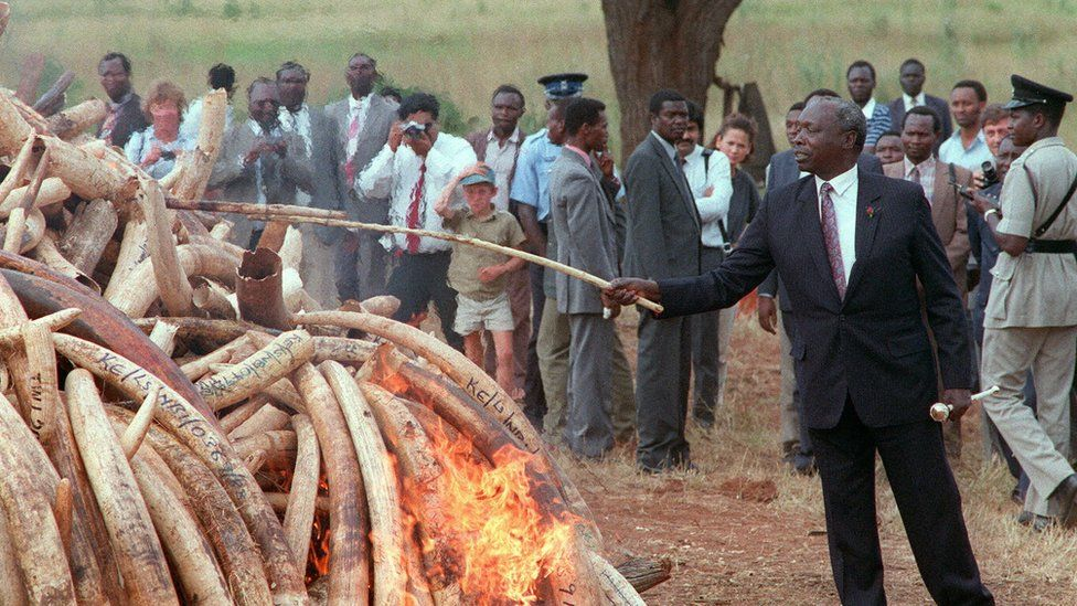 Kenya's President Moi setting fire to ivory in 1989