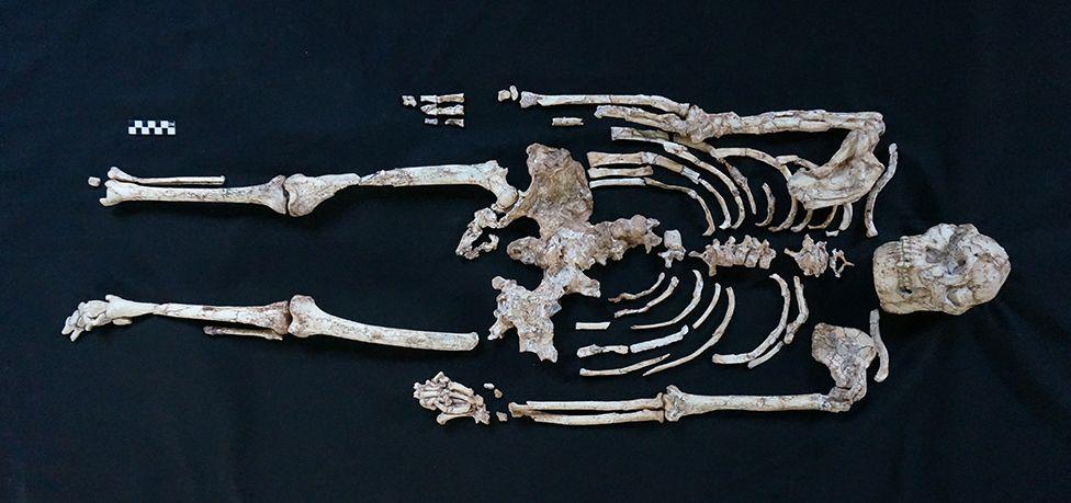 Little Foot skeleton