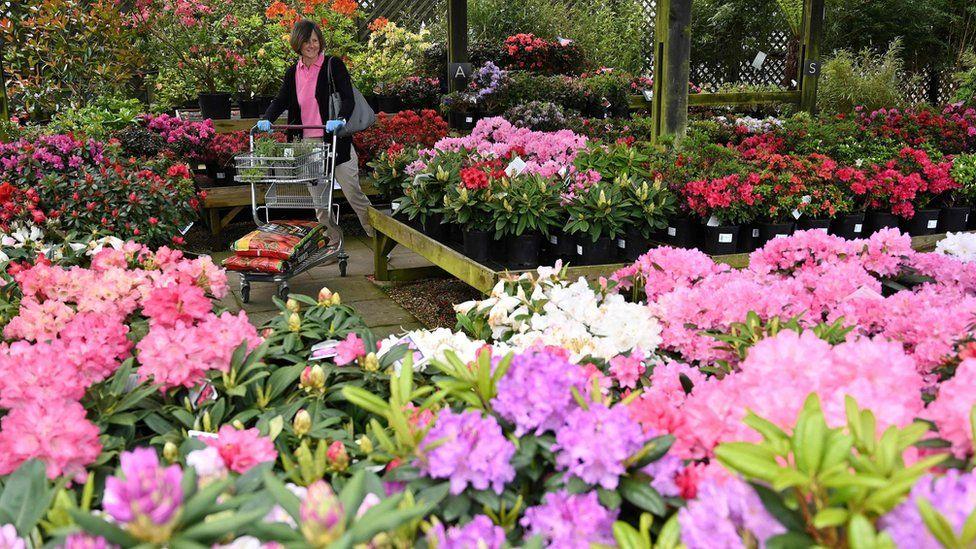 woman in garden centre