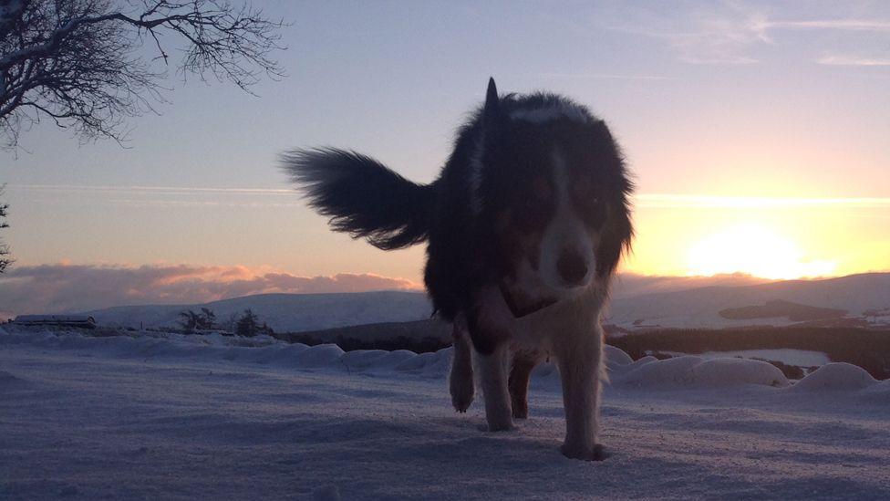 Noah the dog