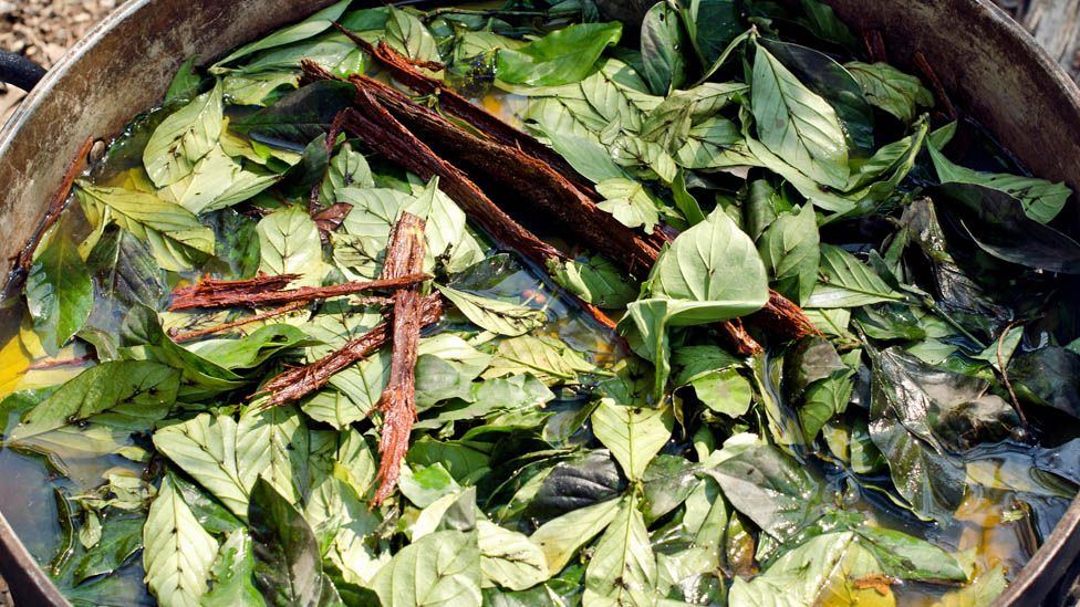Ayahuasca and chakruna leaves being cooked ahead of a ceremony