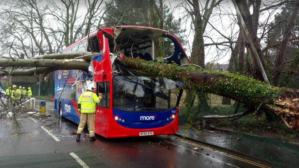 Tree crashes into bus