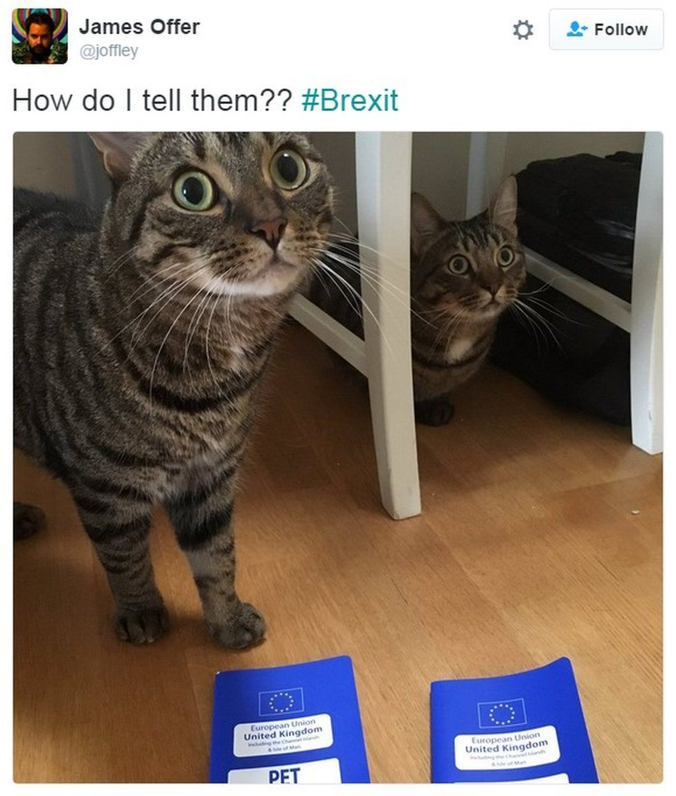 """How do I tell them?? #Brexit"""