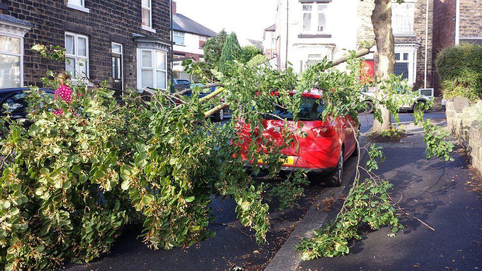 Tree falls on car in Sheffield